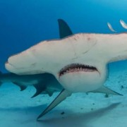 Brainstorm Φακός – Προτζέκτορας «Καρχαρίες»