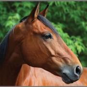Brainstorm Φακός – Προτζέκτορας «My Very Own Horse»