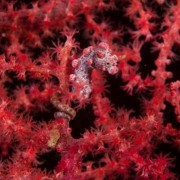Brainstorm Φακός – Προτζέκτορας «Natural History Museum Sea Creatures»