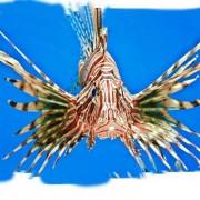 "Brainstorm Φακός – Προτζέκτορας ""Natural History Museum Sea Creatures"""